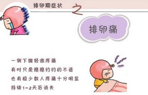 排卵期有什么症状?哪些症状最明显